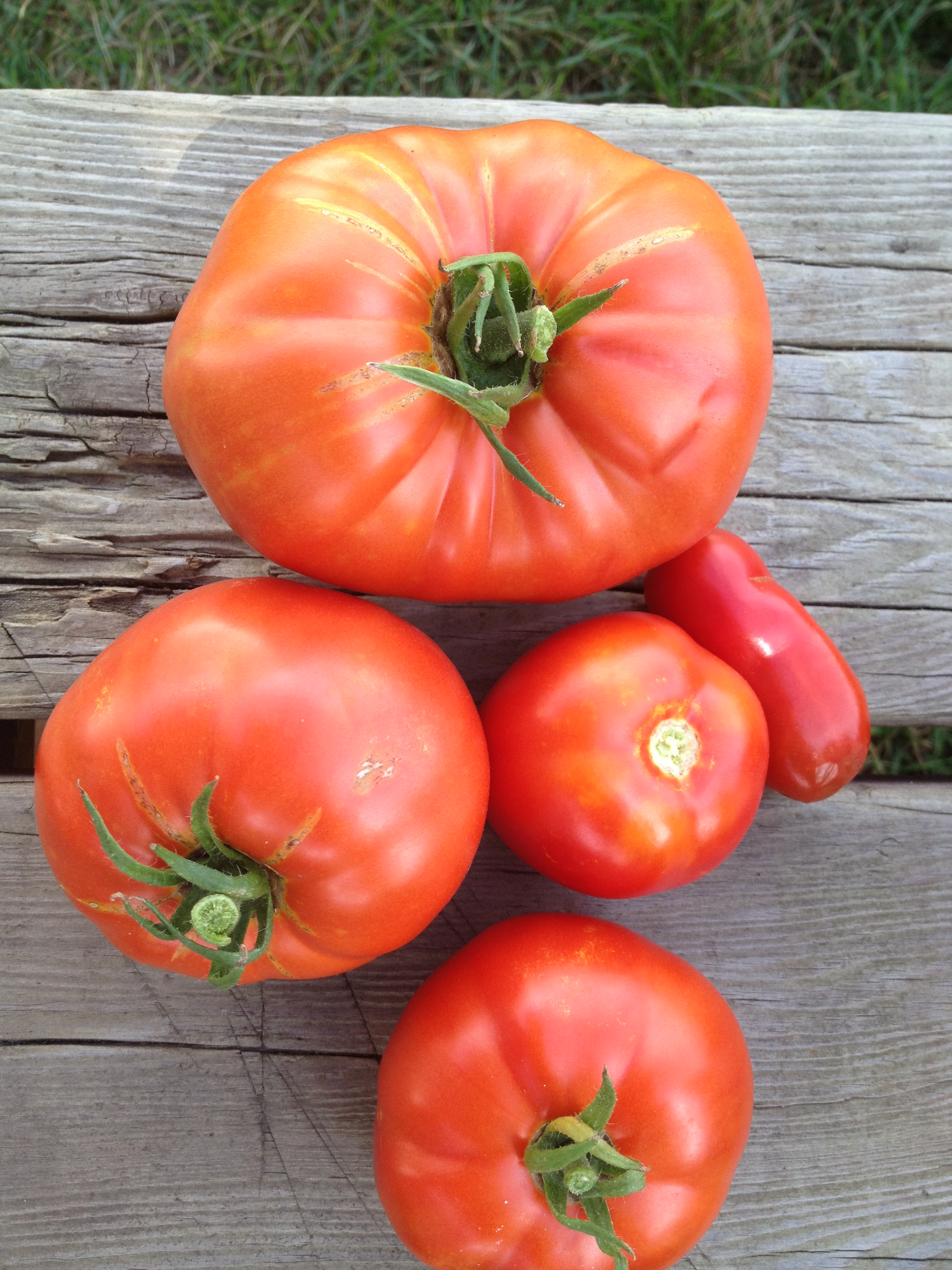 Tomatoes by Whitney Miller