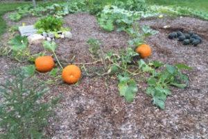 pallet gardening 3 by cheryl gross