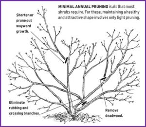 Minimal Annual Pruning