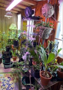 Garden Room 2021