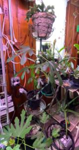 Garden Room Stand