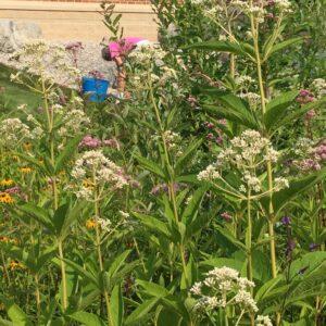 Leelanau County Govt Ctr Garden Flowers