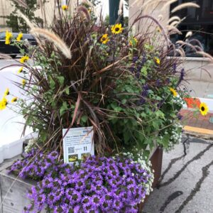 Flowers and grasses - Downtown Traverse City Pollinator Planters